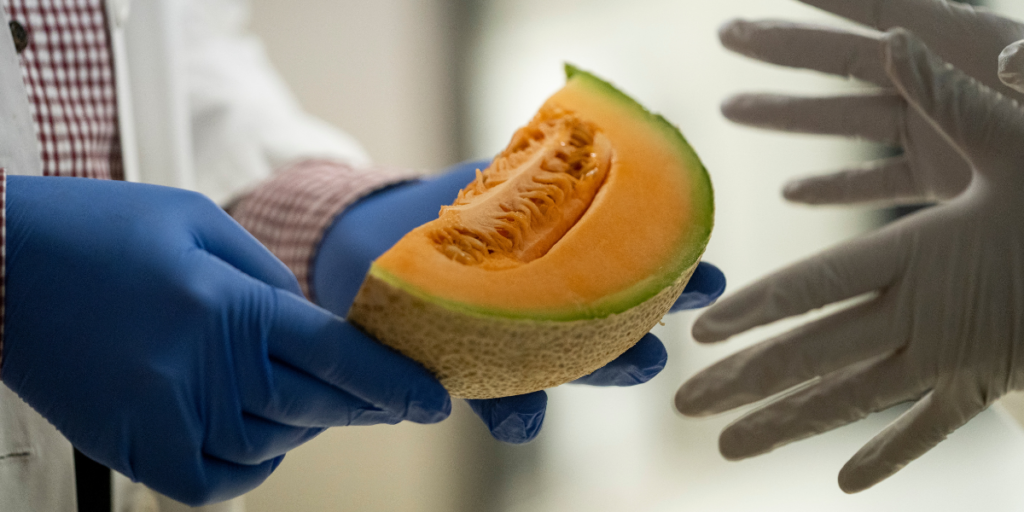 Researcher handing a sliced melon to another researcher