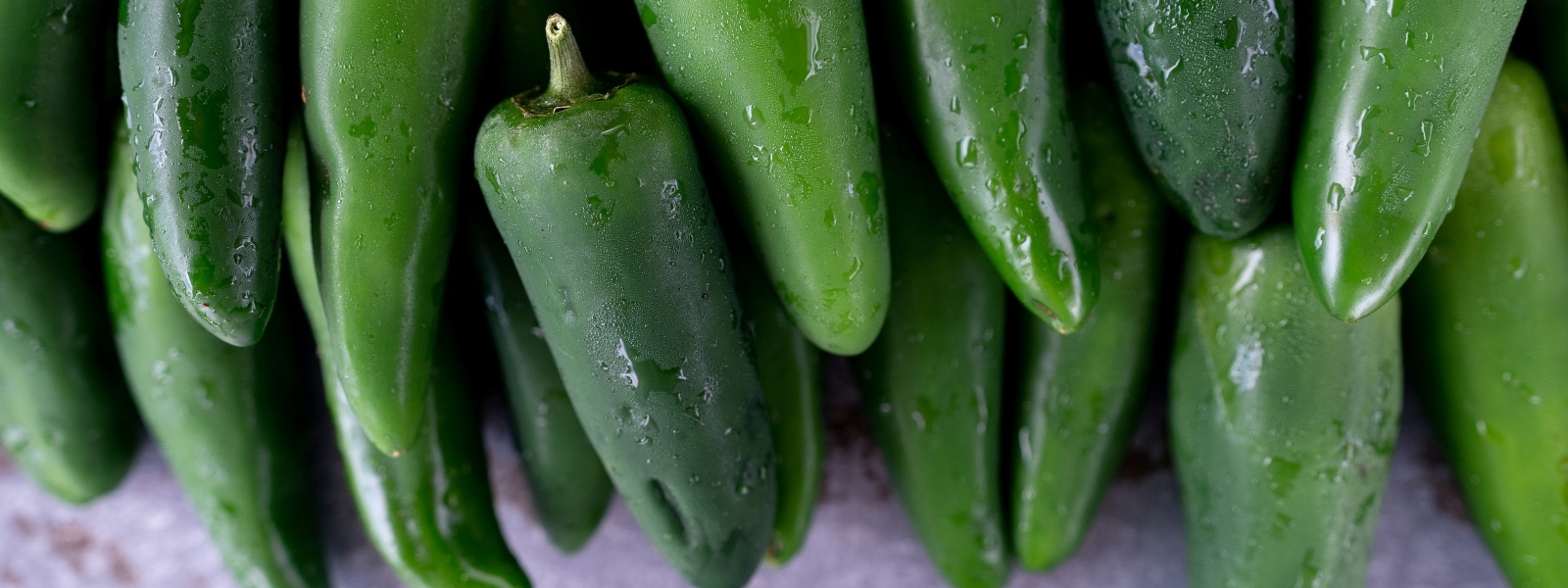 Close up photo of jalapeno peppers grown at the Texas A&M Gardens in College Station, Tx.